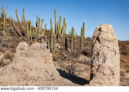 Ruins Of San Fernando Velicata Mission Surround By Cardon Cacti In Baja California, Mexico