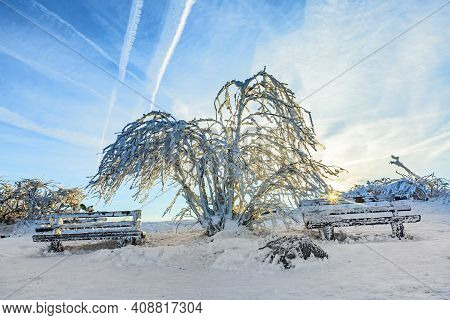 Sunshine Under The Winter Calm Mountain Landscape With Beautiful Fir Trees On Slope At Feldberg Moun
