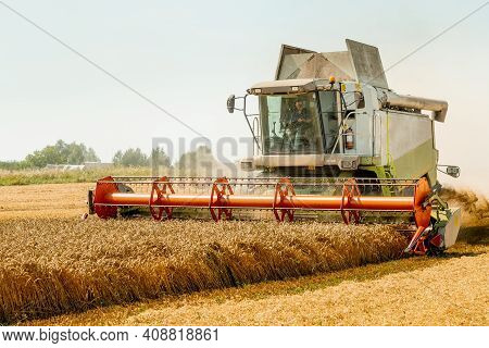 Rotary Straw Walker Cut And Threshes Ripe Wheat Grain. Man In Combine Harvesters With Grain Header,