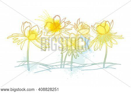 Vector Outline Early Spring Eranthis Or Winter Aconite Flower On The Glade In Pastel Yellow Isolated