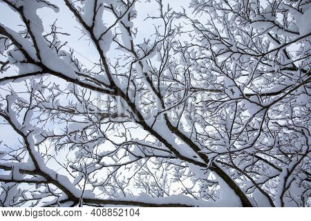 Winter Morning Snow Covered Tree Branches On The Street Of The Athens City, Greece, 16th Of February