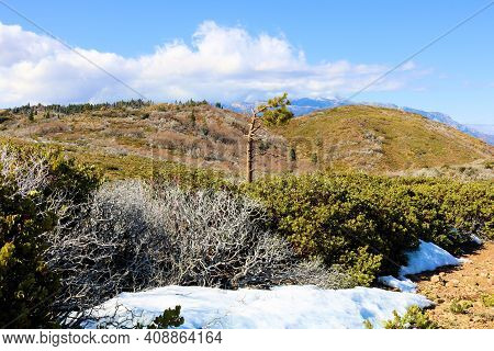 Chaparral Plants And A Lone Pine Tree On A High Desert Mountain Plateau Covered With Snow Taken At A
