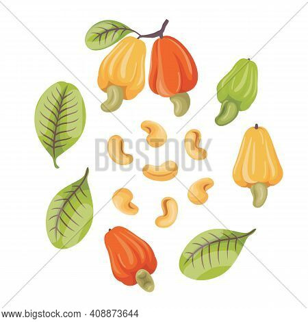 Cashew Fruits With Leaf And Cashew Nut
