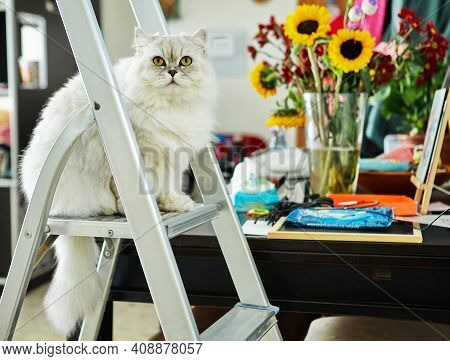 British Long-haired White Cat, Sitting On A Step-ladder Against A Background Of Flowers