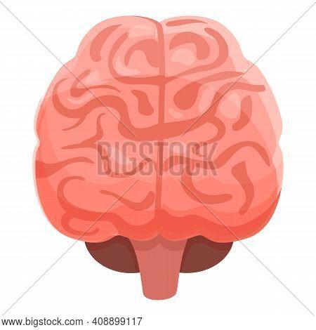 Human Brain Genius Icon. Cartoon Of Human Brain Genius Vector Icon For Web Design Isolated On White