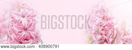 Spring Floral Background. Macro Of Hyacinth Pink Spring Flowers On Light Background. Perfume Of Bloo