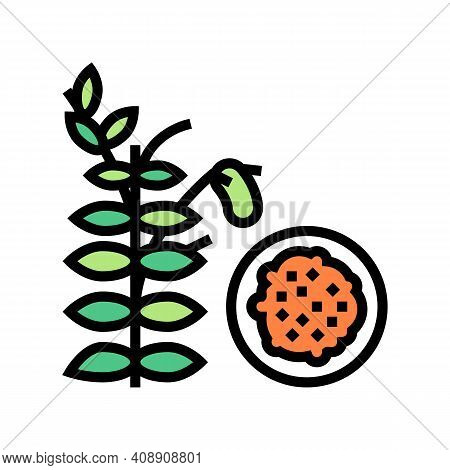 Lentils Groat Color Icon Vector. Lentils Groat Sign. Isolated Symbol Illustration