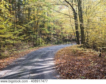 Country Asphalt Road Winding At Colorful Autumn Deciduous Beech Tree And Spruce Tree Forest Ground C