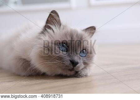 Beautiful Fluffy Cat Lying On Warm Floor In Room, Closeup. Heating System