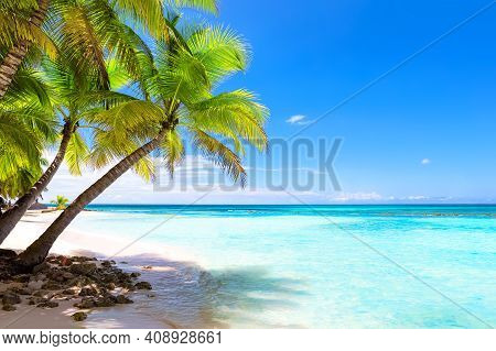 Coconut Palm Trees On White Sandy Beach In Punta Cana, Dominican Republic. Vacation Holidays Backgro