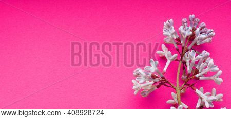 Lilac. A Branch Of Purple Lilac On A Pink Background. Lilac Blooming View From Above. Spring, Plants
