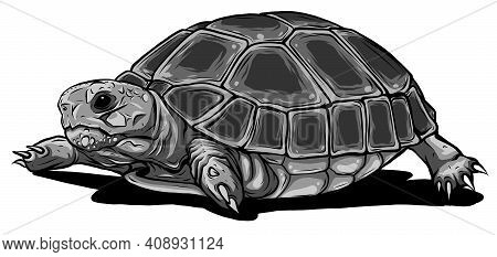 Monochromatic Turtle Vector Icon.cartoon Vector Icon Isolated On White Background Turtle.