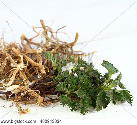 Dried Nettle Roots And Fresh Plant. Urtica Diocica On White Table.  Nettle Roots And Leaves Are Good
