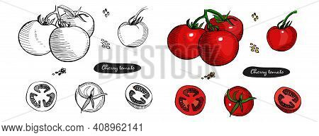 Tomato Hand Drawn Set Of Vector Illustration.vintage Ink Hand Drawn Tomato Black And White And Color
