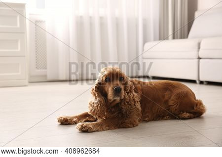 Cute Cocker Spaniel Dog Lying On Warm Floor Indoors, Space For Text. Heating System