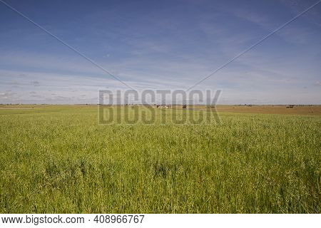 Extensive Dry Farming Of Cereals In The Castro Verde Special Protection Area. It Is The Most Represe