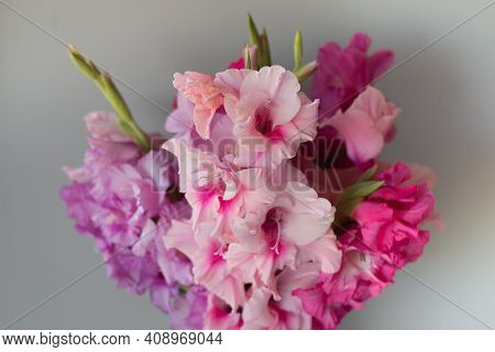 Pink Gladiolus Bouquet In Glass Vase With Copy Space