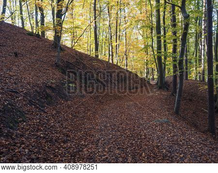 Footpath At Colorful Autumn Deciduous Beech Tree And Spruce Tree Forest Ground Covered With Fallen L