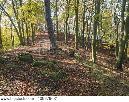 Footpath At Colorful Autumn Deciduous Beech Tree Forest With Sandstone Rocks, Covered With Fallen Le