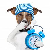 sleepyhead dog tired with clock and funny nightcap poster