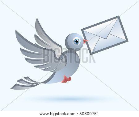 Homing Postal Pigeon