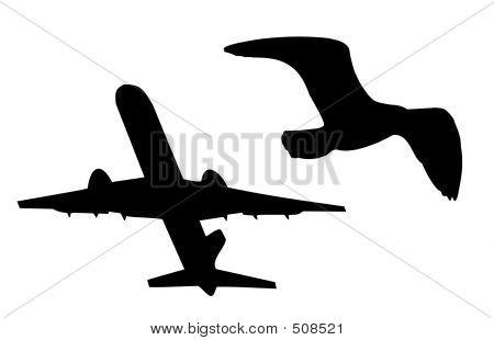 Plane And Bird