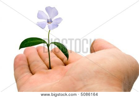 Flower Is In Right Hand