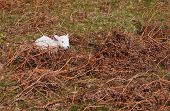 A newborn lamb on open moorland in the UK. poster