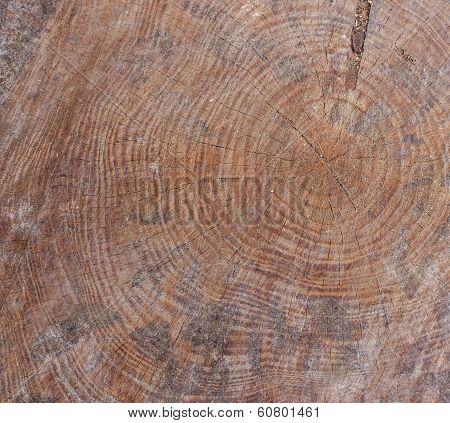 Brown Tree Trunk Texture Or Background