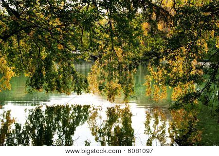 Tree Branches Hanging Over Lake