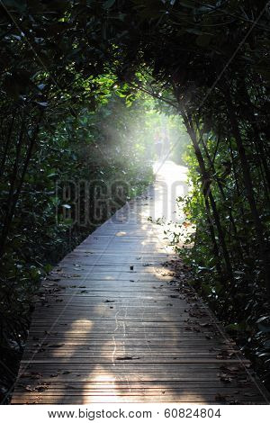 Wooden Walkway For Nature Study In Mangrove