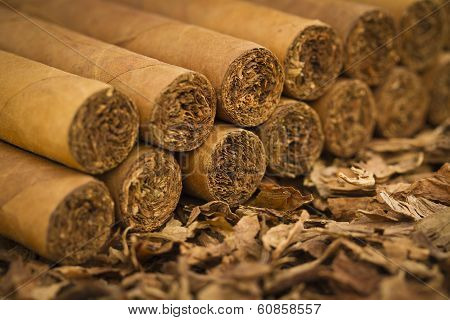 Cigars on Tobacco