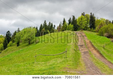 Path To Mountain Forest
