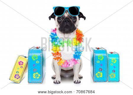 Dog Summer  Vacation