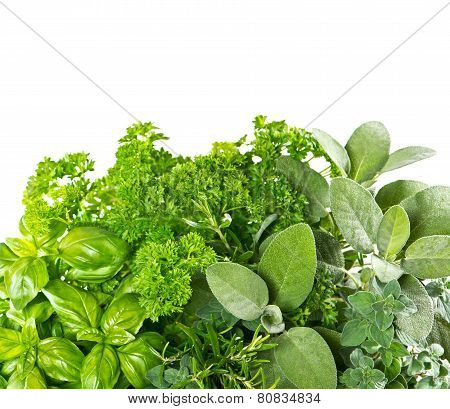 Fresh Herbs Over White Background. Healthy Food Ingredients