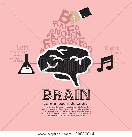 Brain Infographic Vector.