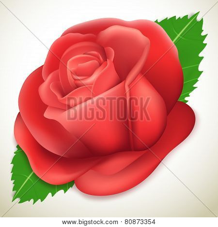 Realistic rose, vector illustration