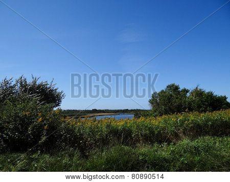 Martha's Vineyard Pond