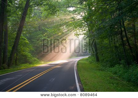 Forest Road Sun Beams And Rays Through Trees