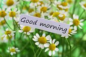 Good morning card with chamomile flowers, closeup poster