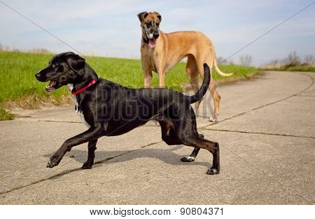Great Dane and black dog on pavement