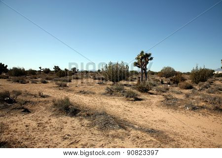 California Desert in Death Valley with Joshua Trees, Sage Brush, Dirt Roads, Sand Gravel, and other wild life that ekes out a life in the harsh dry desert sun.