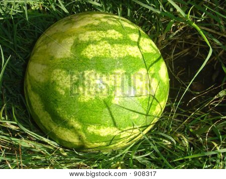 Watermelon In Grass