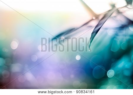 Twinkling Lights Vivid Color Blurred Natural Bokeh