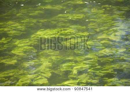 Abstract organic slimy substance with algae in the water
