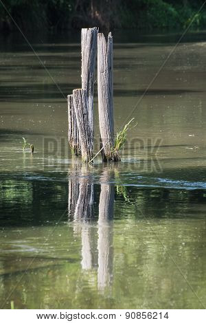 Wooden Posts Sticking Out Of The Water