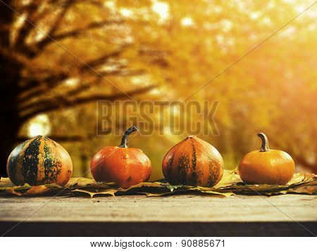 Autumn nature concept. Pumpkins on wood. Thanksgiving.