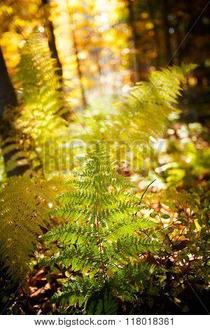 Beautiful Autumn Fem Detail