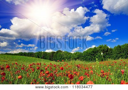 Bright Sun Over Poppy Field