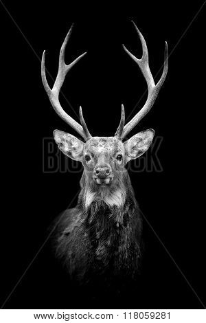 Deer On Dark Background